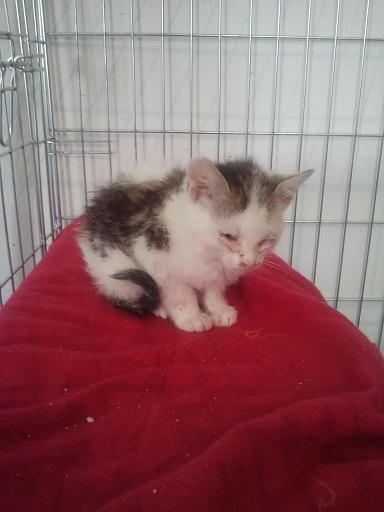 Prise en charge urgente : 5 chatons très malades Photo703