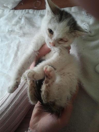 Prise en charge urgente : 5 chatons très malades Photo704