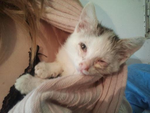 Prise en charge urgente : 5 chatons très malades Photo705