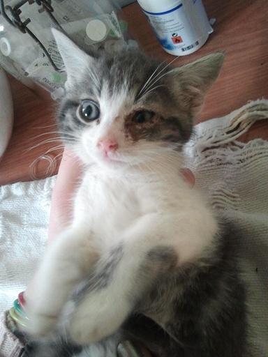 Prise en charge urgente : 5 chatons très malades Photo709