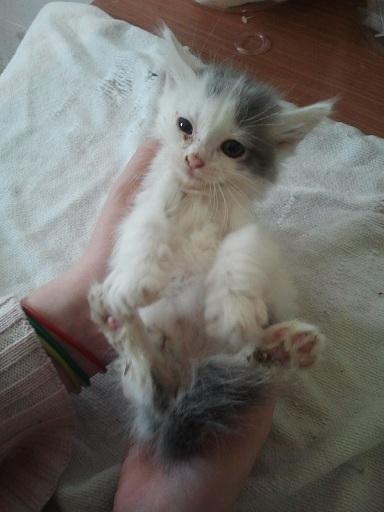 Prise en charge urgente : 5 chatons très malades Photo710