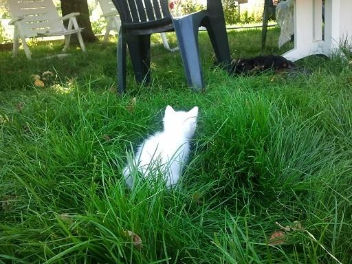 Dans le jardin Photo724