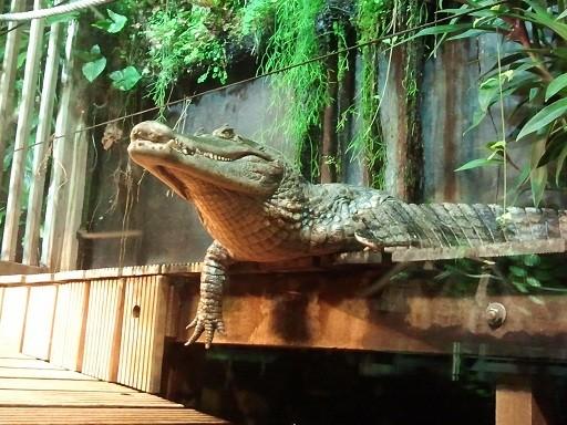 Absence TOTALE du 2/11/12 au 04/11/12 Photo864