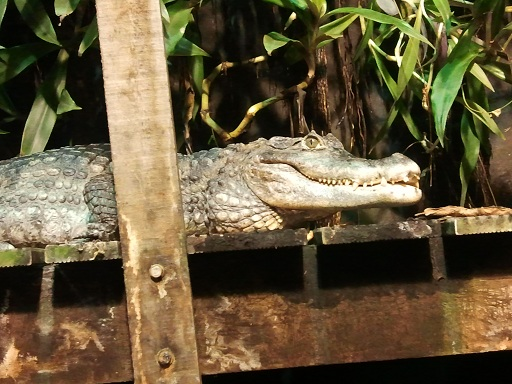 Absence TOTALE du 2/11/12 au 04/11/12 Photo865