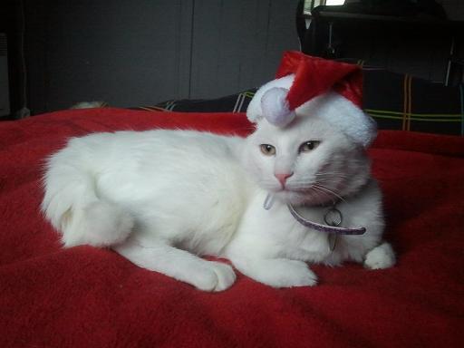 Un gros lutin de Noël <3 Photo983