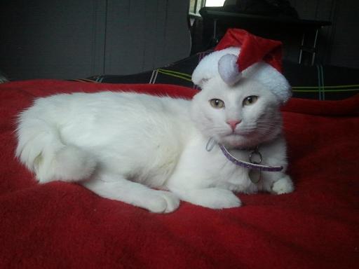 Un gros lutin de Noël <3 Photo984