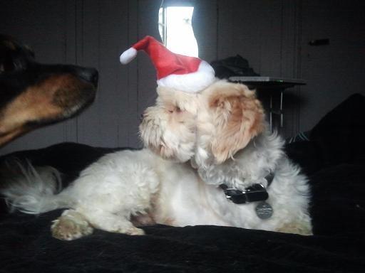 Papa Noël est ans la place ! Photo991