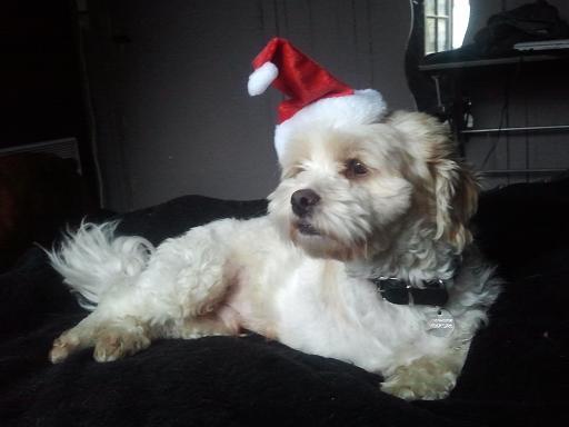Papa Noël est ans la place ! Photo993