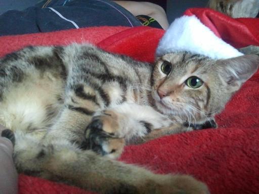 Notre fée de Noël ! Photo994