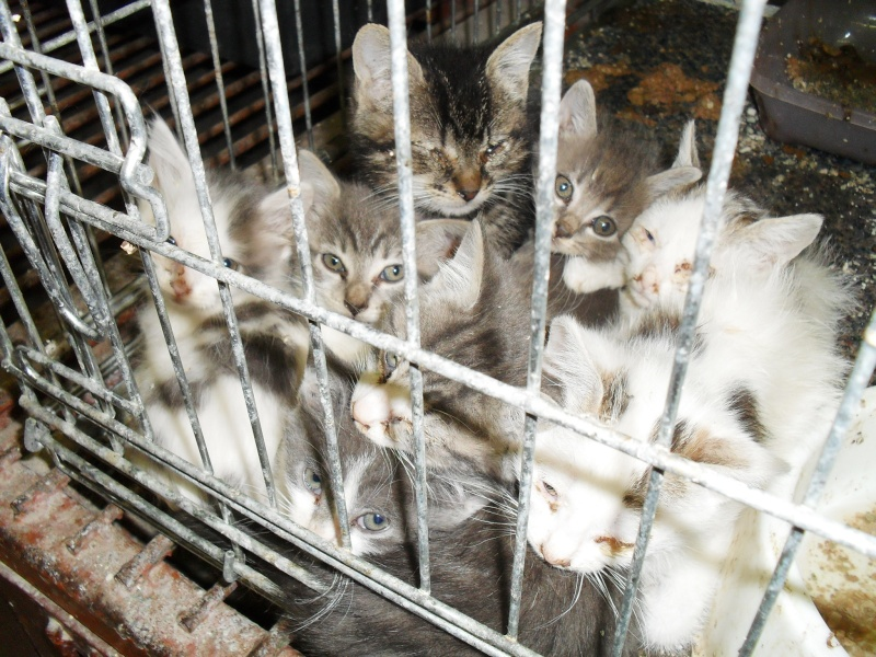 Prise en charge urgente : 5 chatons très malades Sdc19313