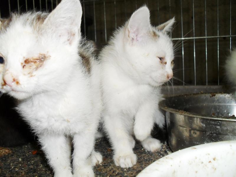 Prise en charge urgente : 5 chatons très malades Sdc19314