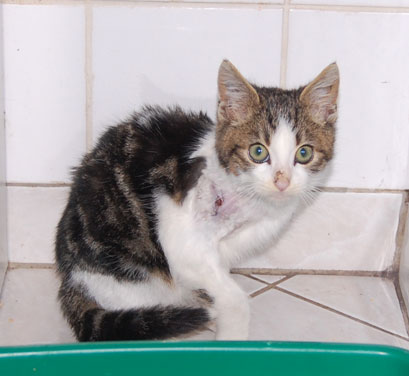 2 chatons dont 1 blessé et os à nu + abcès par dessus - Page 2 Sushi110