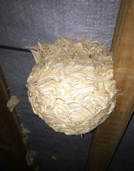 Un gros et plusieurs petits nids dans mon grenier Sans_t10