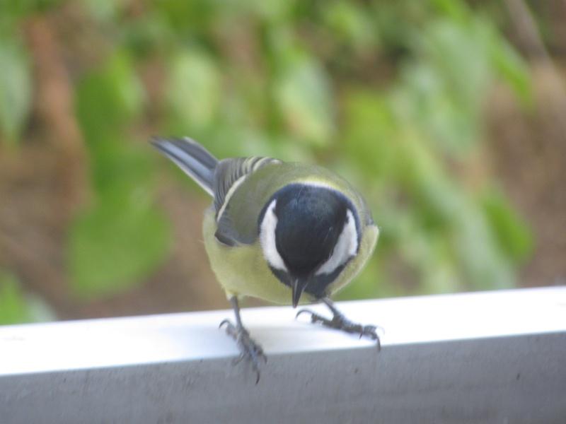 mes modestes photos animalières Img_7821