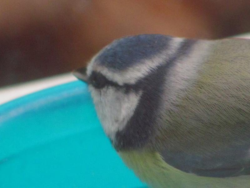 mes modestes photos animalières Img_7920