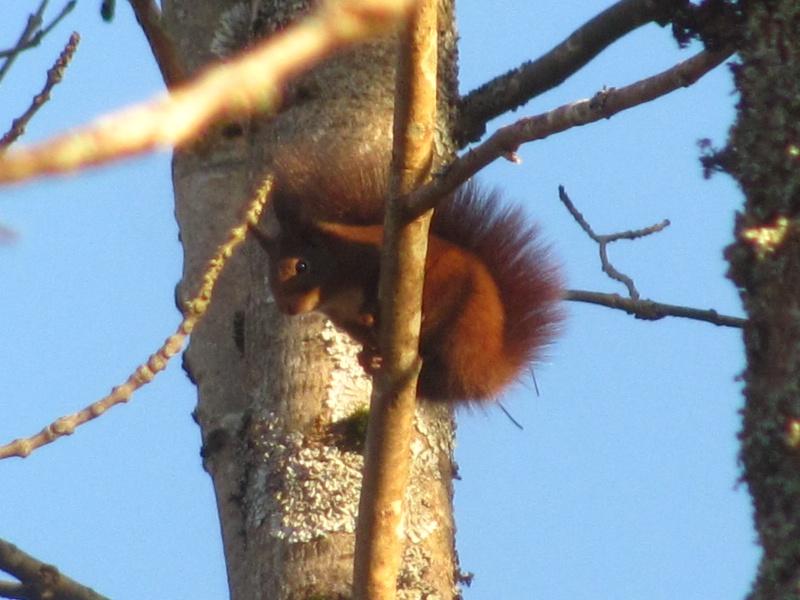 mes modestes photos animalières Img_8132