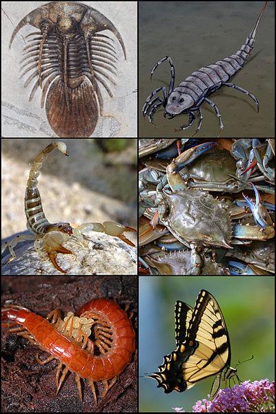 Vídeos de Artrópodes 400px-10