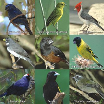 Vídeos de Aves (com exceção das Aves de Rapina) Aves-010