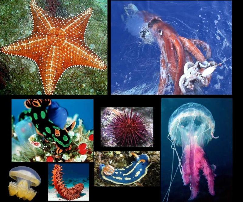 Vídeos de Outros Animais Aquáticos (com exceção dos Peixes, Mamíferos, Répteis e Artrópodes). Estrel10