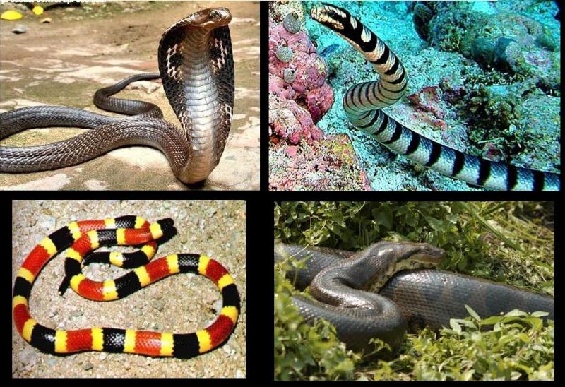 Vídeos de Serpentes ou Cobras Imagem10