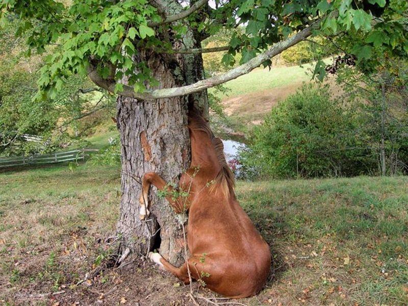Images comiques du web (TF ou pas) - Page 7 Horse10