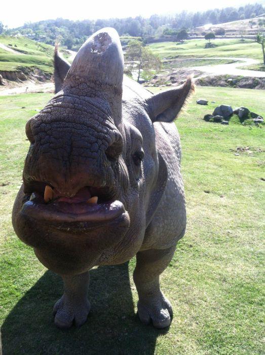 Images comiques du web (TF ou pas) - Page 6 Rhinox10