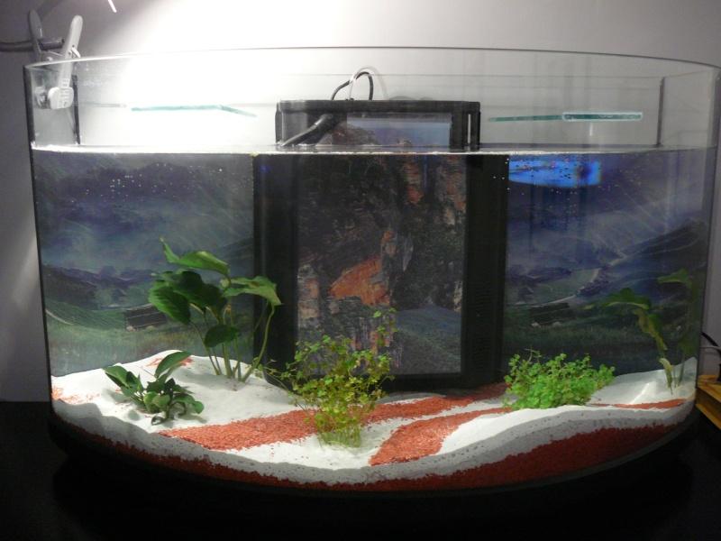 apres mon premier nesquik; mon premier aquarium! bac de super débutante! P1020413