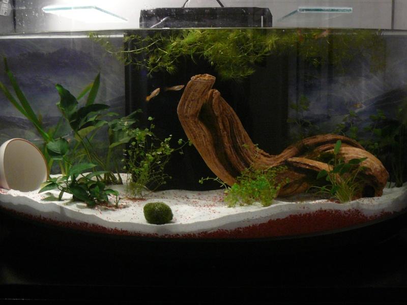apres mon premier nesquik; mon premier aquarium! bac de super débutante! P1020514