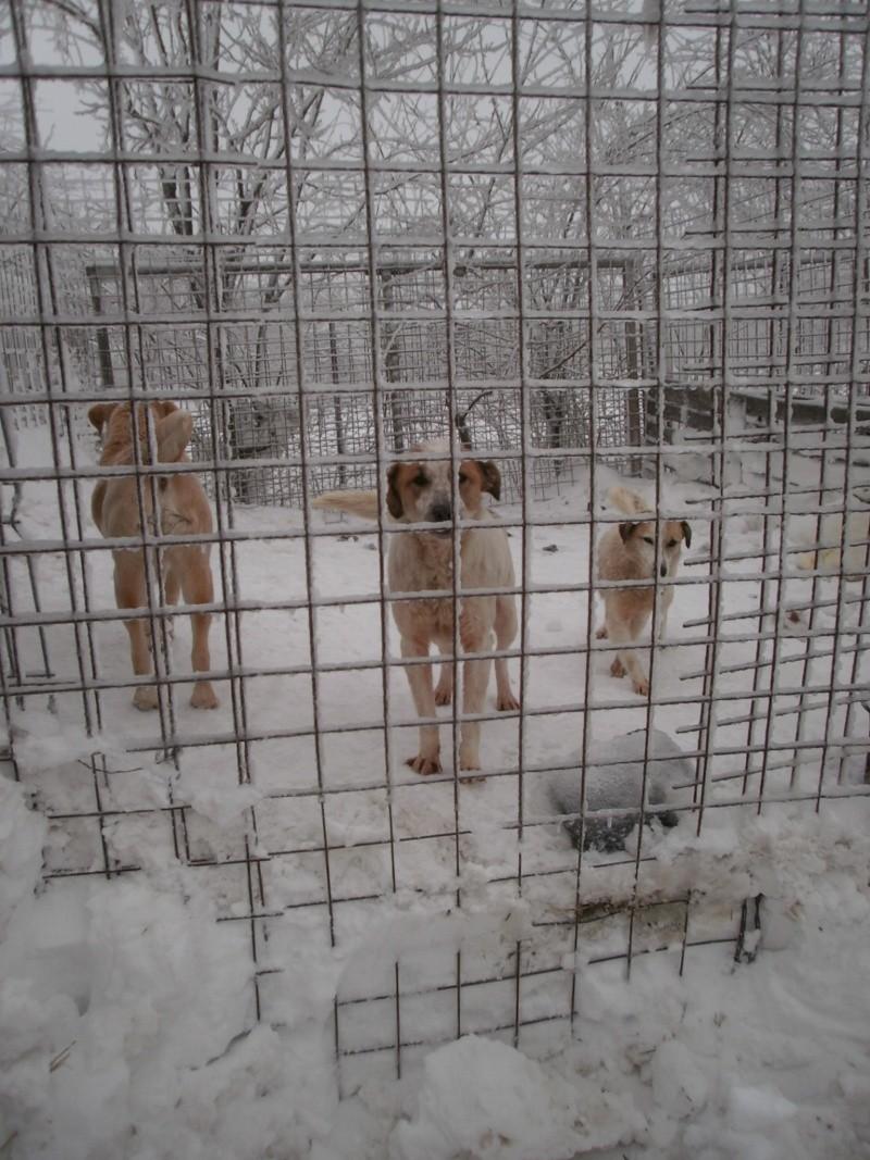 fata - FATA, née le 12/06/2009, arrivée chiot au refuge (soeur de Mickey et fille de Tara) - en FA dans le 49 - GARANT - SOS -R-FB-SC-30MA P2050220