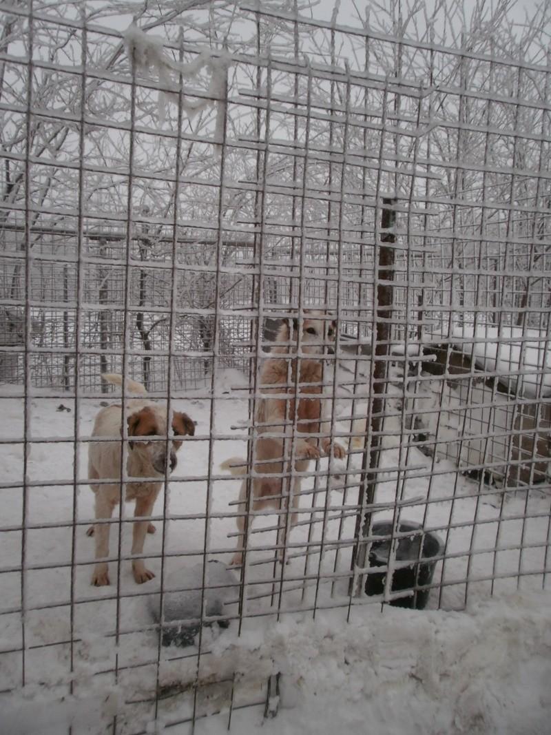 fata - FATA, née le 12/06/2009, arrivée chiot au refuge (soeur de Mickey et fille de Tara) - en FA dans le 49 - GARANT - SOS -R-FB-SC-30MA P2050221