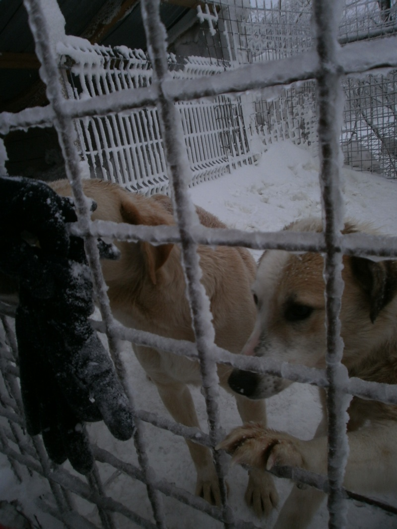 fata - FATA, née le 12/06/2009, arrivée chiot au refuge (soeur de Mickey et fille de Tara) - en FA dans le 49 - GARANT - SOS -R-FB-SC-30MA P2050222