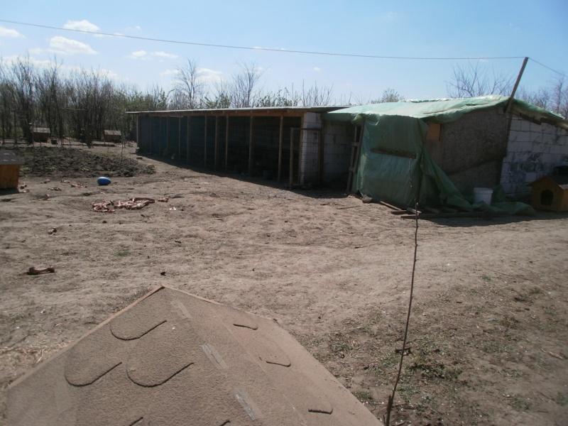 boxes - ALLEZ ON CONTINUE L'AVENTURE CONSTRUISONS LES DERNIERS  BOXES AU REFUGE DE LENUTA -  R P4240722