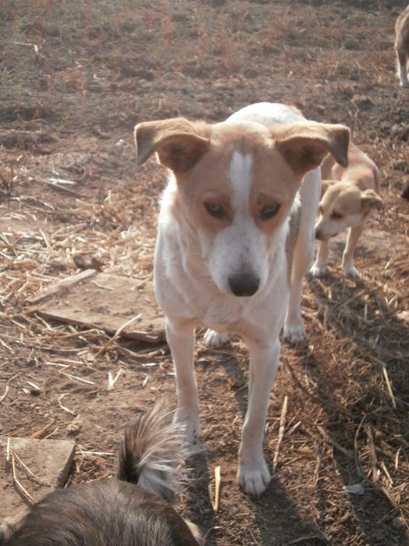 IAGOO FILS DE GEORGICA ET D'ANOUSHKA, né le 20 Aout 2010, parrainé par Babsu -SC-LBC- R- SOS -  Pc030118