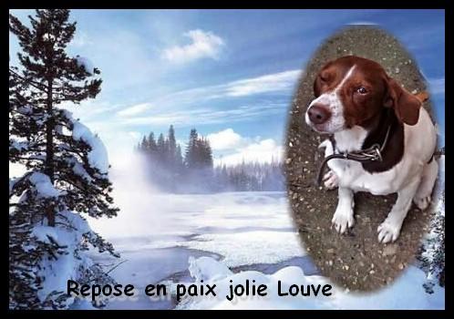 SOS Recherche des dons pour soigner Lolly ( ex Olly ) - aujourd'hui Louve n'est plus mais Lolly aurait besoin de plusieurs parrains pour les frais vétérinaire de MMme H - parrainée par Santig du - Photo_15