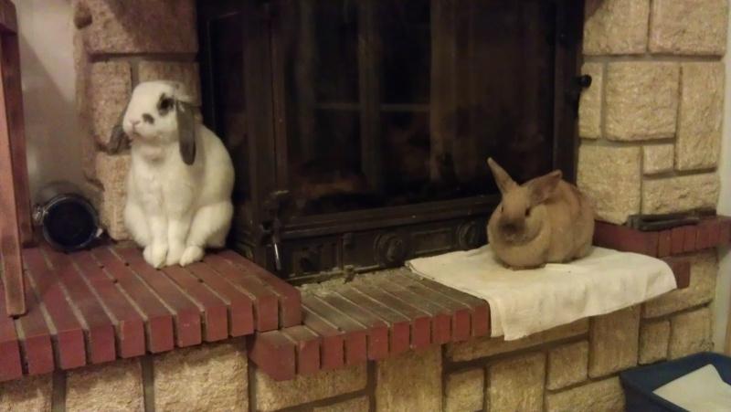 Caramelle , lapine femelle née en mars 2011 ( Adoptee ) Imag0010
