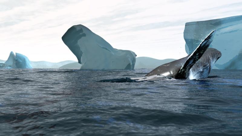 Modéliser des baleines Grande11