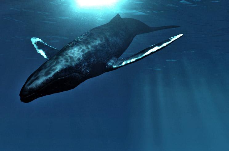 Modéliser des baleines Plonge10