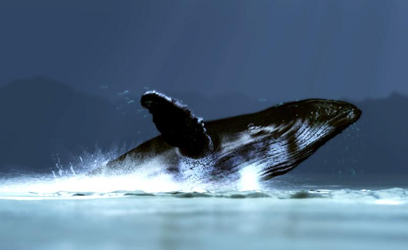 Modéliser des baleines Sortie10