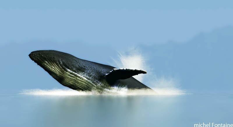 Modéliser des baleines Sortie11