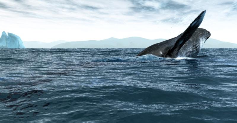 Modéliser des baleines Sortie12