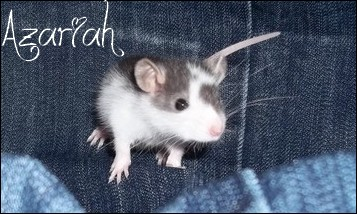 Azariah  100_1110