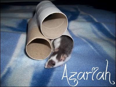 Azariah  100_1111