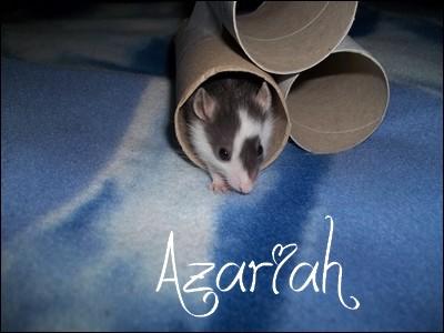 Azariah  100_1112