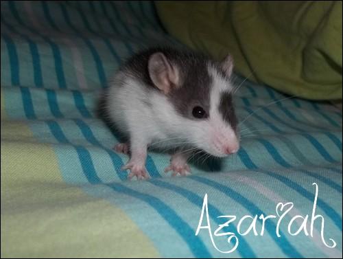 Azariah  100e1010