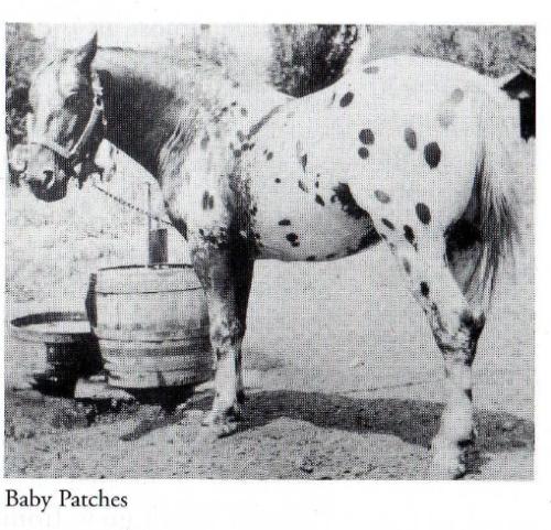 photo de chevaux fondations - Page 5 Baby_p10