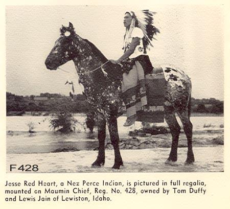 photo de chevaux fondations - Page 5 Maumin10