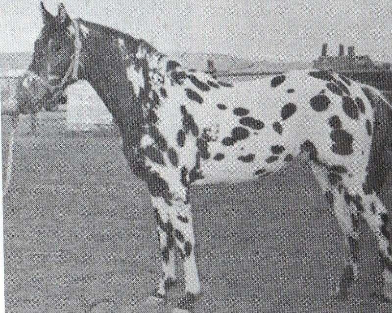 photo de chevaux fondations - Page 5 Ruff_s10