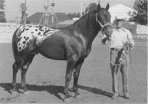 photo de chevaux fondations - Page 5 Storm_10