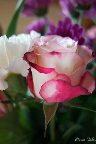 jeu de bouquet P1030915