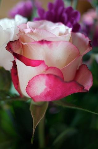 jeu de bouquet P1030922